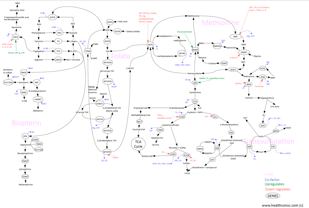 methylation-map
